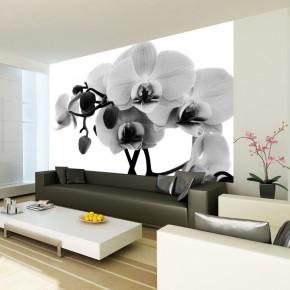 Fototapeta czarno biała orchidea