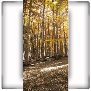 Fototapeta las na wąską ścianę do przedpokoju