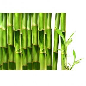 bambus na ścianę