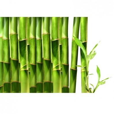 Fototapeta orient bambusów
