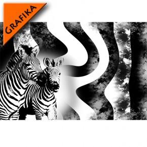 zebra - czarno biała