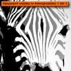 Fototapeta zebra - czarno biała