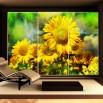 Fototapeta pole słoneczników na szafę