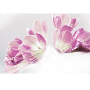 fioletowe kwiaty lilii