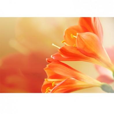 Fototapeta pomarańczowa lilia