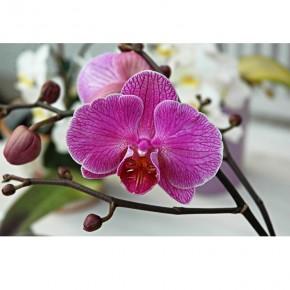 gałązka z kwiatuszkami orchidei
