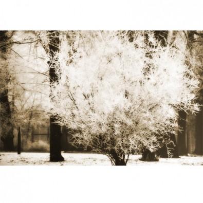 Fototapeta szron na gałęziach