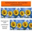 AS_Słoneczniki