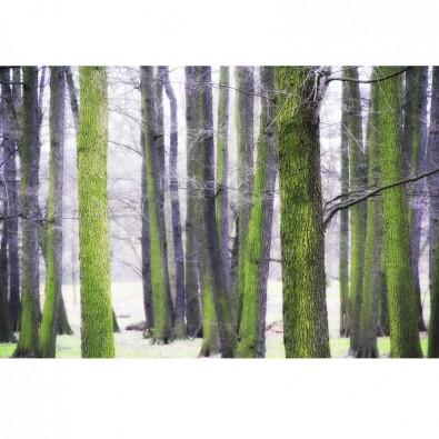 Fototapeta drzewa zimą