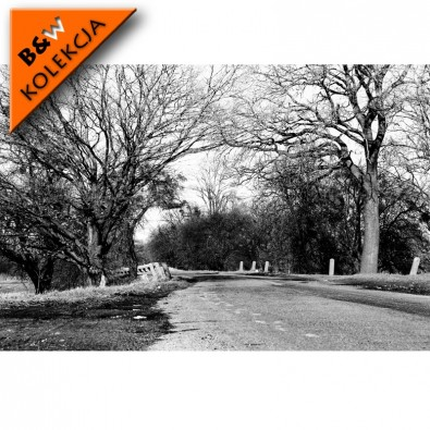 Fototapeta droga jesienią - czarno biała