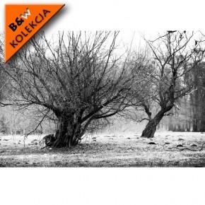 suche drzewa zimą