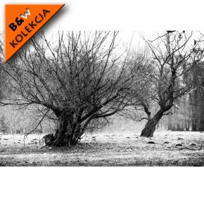 suche drzewa
