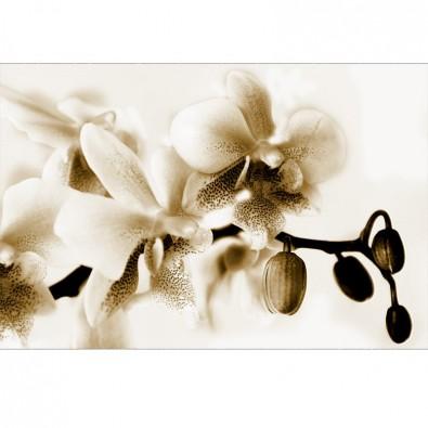 Fototapeta gałązka storczyka