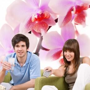 AS_Orchidea V