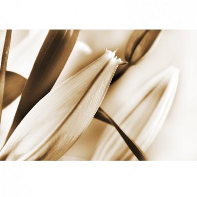 Fototapeta brązowy liliowiec