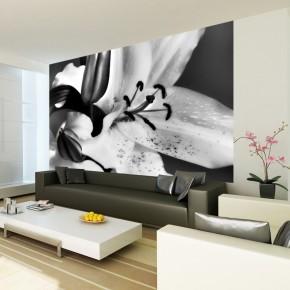 Fototapeta smolinosy lilia
