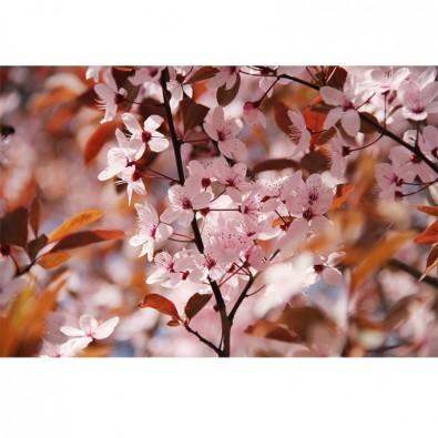 Fototapeta różowa wiśnia | fototapety kwiaty