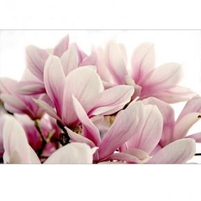 magnoliowa etiuda