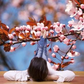 Fototapeta wiśnia - małe kwiatki na gałązce