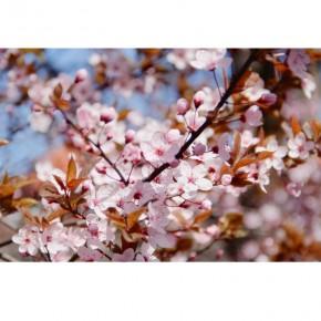 AS_Wiosna