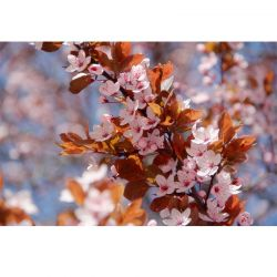 Fototapeta drobne kwiatuszki