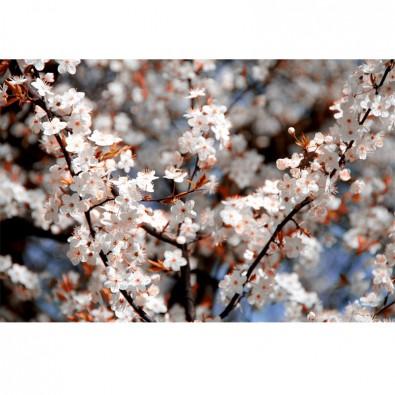 Fototapeta na szafę - kwiaty jabłoni
