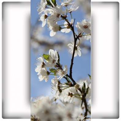 Fototapeta białe kwiaty na wąską ścianę