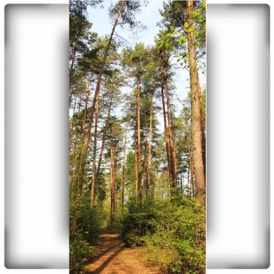 Fototapeta las na wąską ścianę