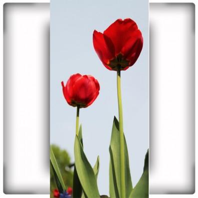AS_Tulipany