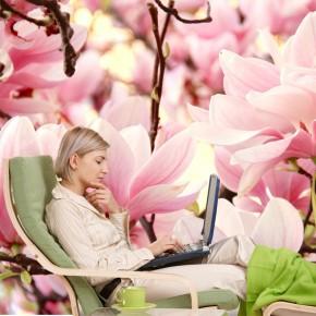 Fototapeta magnolie