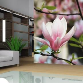 Fototapeta gałązka magnolii