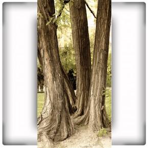 Fototapeta trzy drzewa do przedpokoju