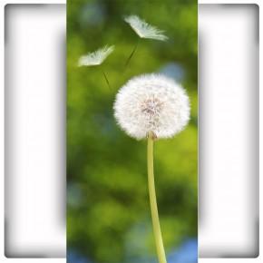 Fototapeta biały dmuchawiec na zielonym tle łąki
