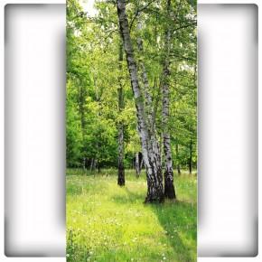 Fototapeta brzozowa polana