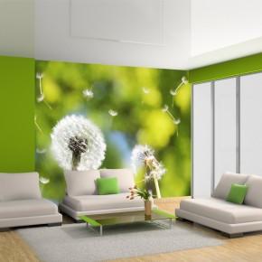 Fototapeta zielone dmuchawce