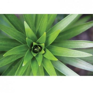 Fototapeta liście kwiatów