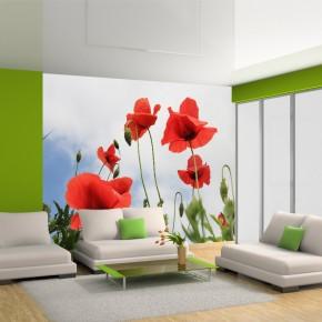 Fototapeta kwiaty maki