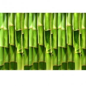 kłącza bambusowe