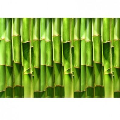 fototapeta w bambusy