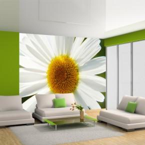Margaretki | Fototapeta kwiaty