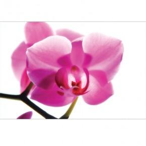 Sonata orchidei
