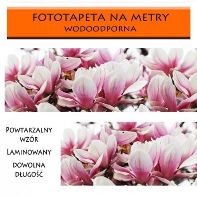 Fototapeta pąki magnolii