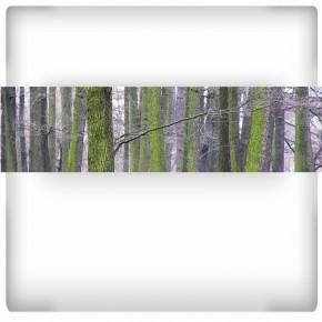 Fototapeta pnie drzew - panoramiczna