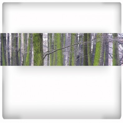Fototapeta drzewa - panoramiczna
