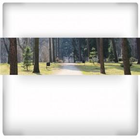 Fototapeta parkowa aleja - panoramiczna