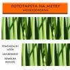 Fototapeta zielone pędy