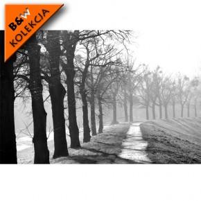 Fototapeta drzewa czarno białe
