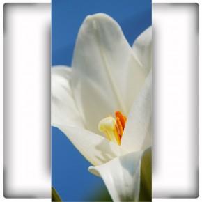 Fototapeta duży biały kwiat - pionowa