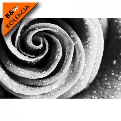 Fototapeta duża róża - czarno biała