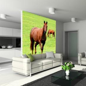 Koń | Fototapeta zwierzęta